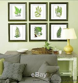 Fern Botanical Prints set of 12 unframed wall decor art