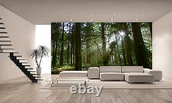 Forest in the Morning Light Wall Mural Photo Wallpaper GIANT WALL DECOR
