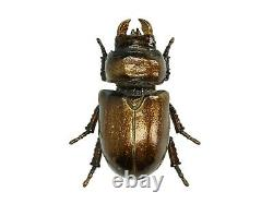 Steampunk Gold Bronze Stag Beetle Wall Art Hanging Insect Bug Ornament Decor