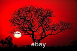 Arbre Rouge African Park Sun Nature Wall Mural Photo Wallpaper Giant Wall Decor