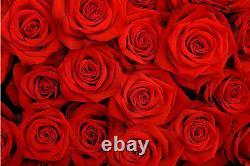 Fond D'écran Mural Rouge Roses Papier Peint Giant Decor Affiche De Papier Pâte Libre