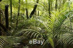 Jungle Rainforest Arbres Plantes Peint Papier Peint Photo Giant Wall Decor